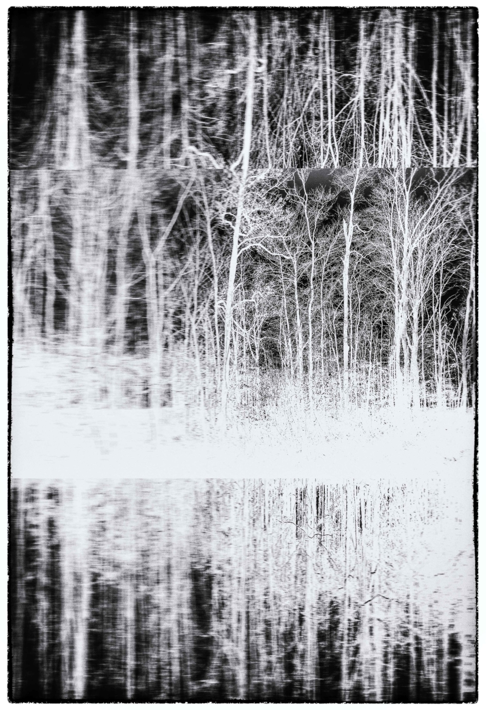 'Interconnected' - Fine art photography 17x23