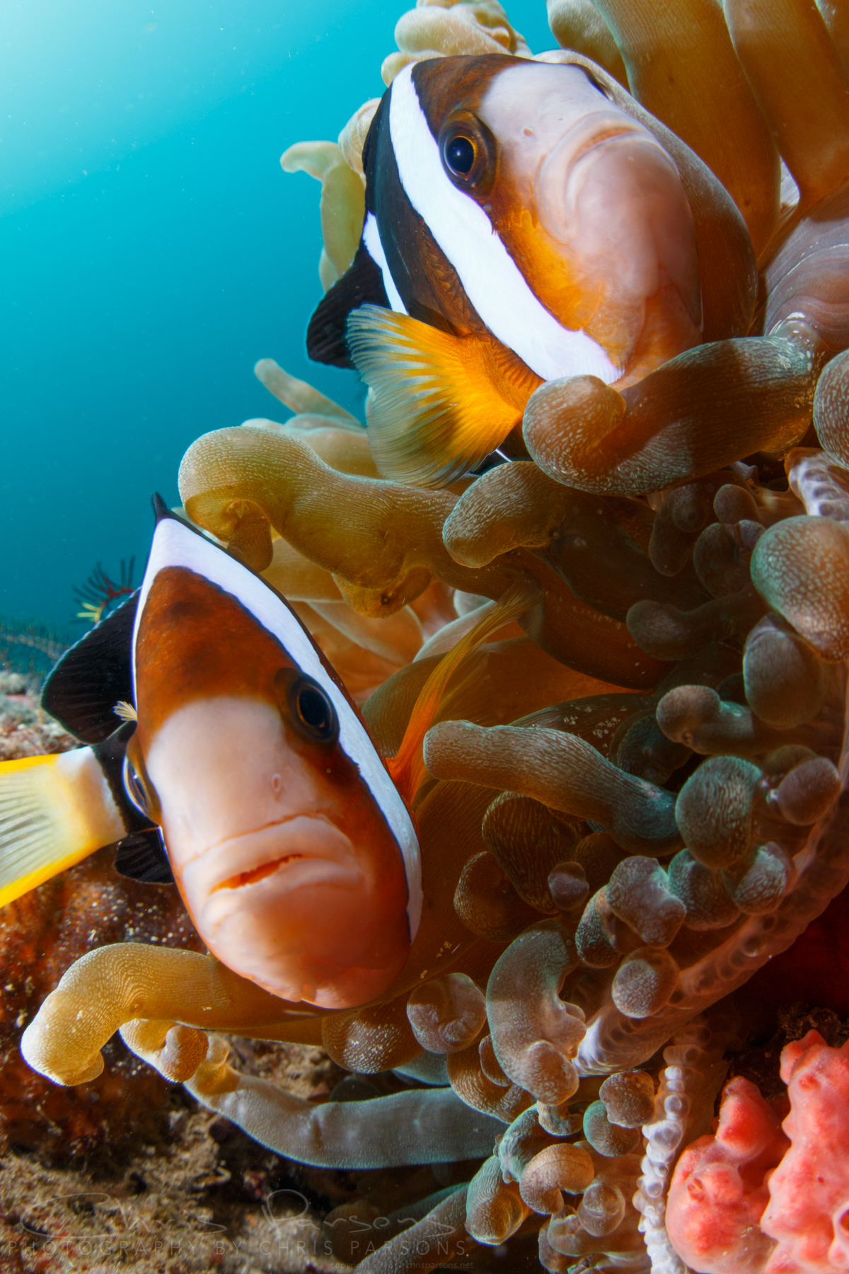 With lots of smaller subjects and beautiful reefs, Anilao is also ideal for close-focus, wide-angle work.