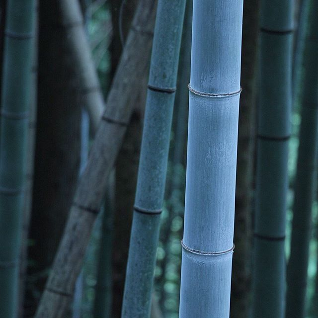 #neon #bamboo #kyoto #japan #blue #travel #travelphotography #adventure #abstract #nature #colourful #light