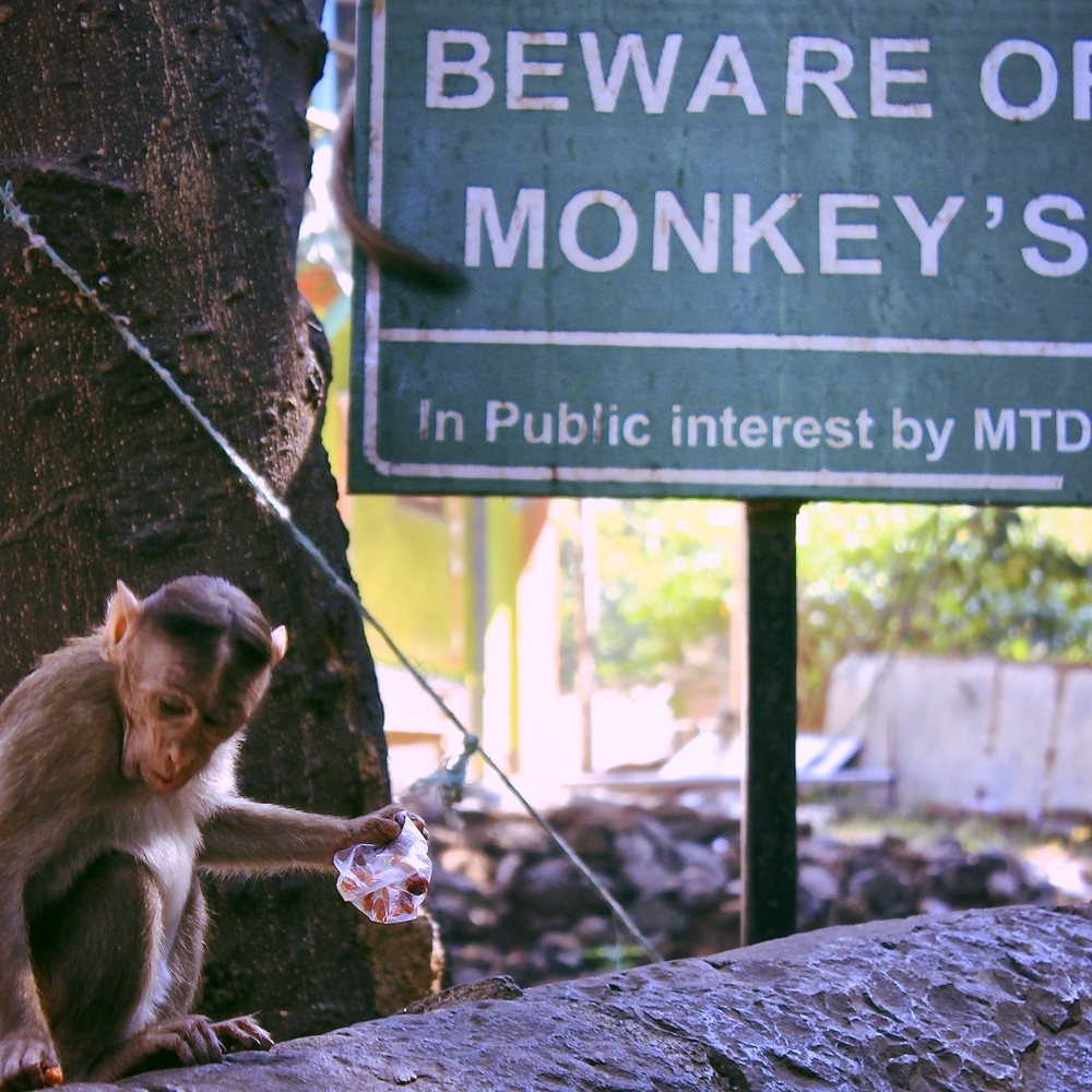 india budget travel guide monkeys