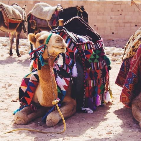 jordan petra travel guide camels