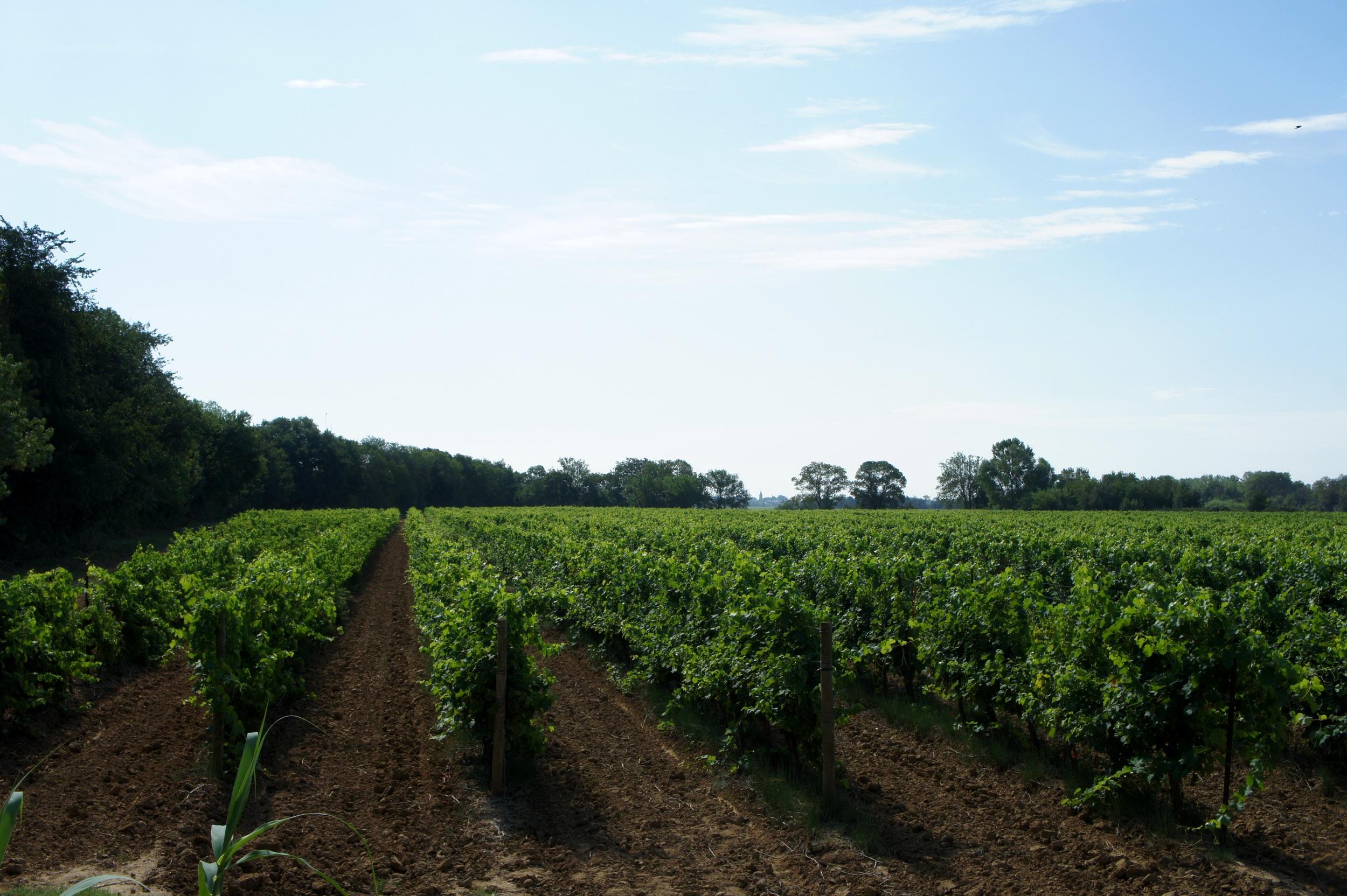 The fields of Domaine de Montmarin