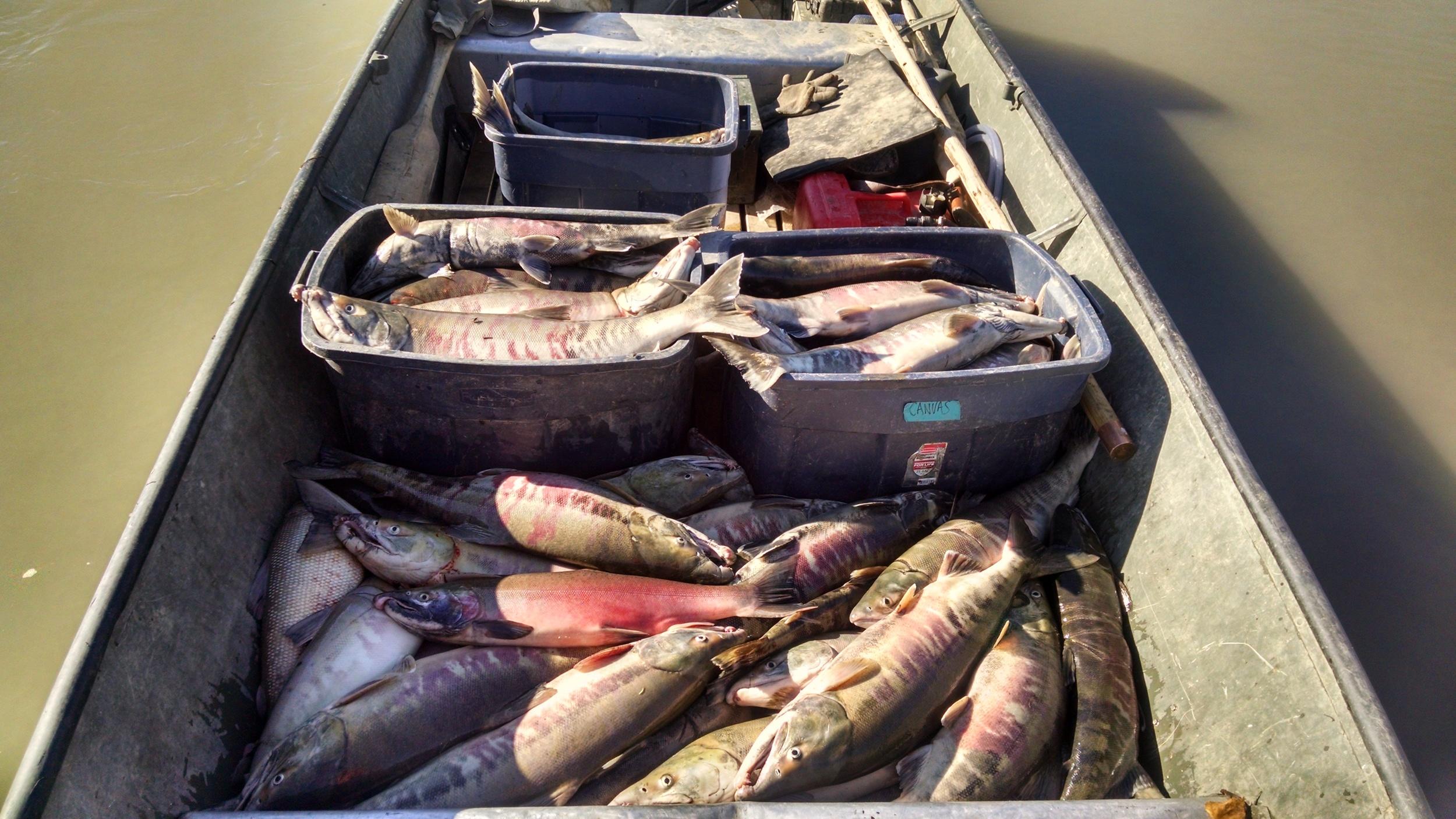 Boat full of fish!