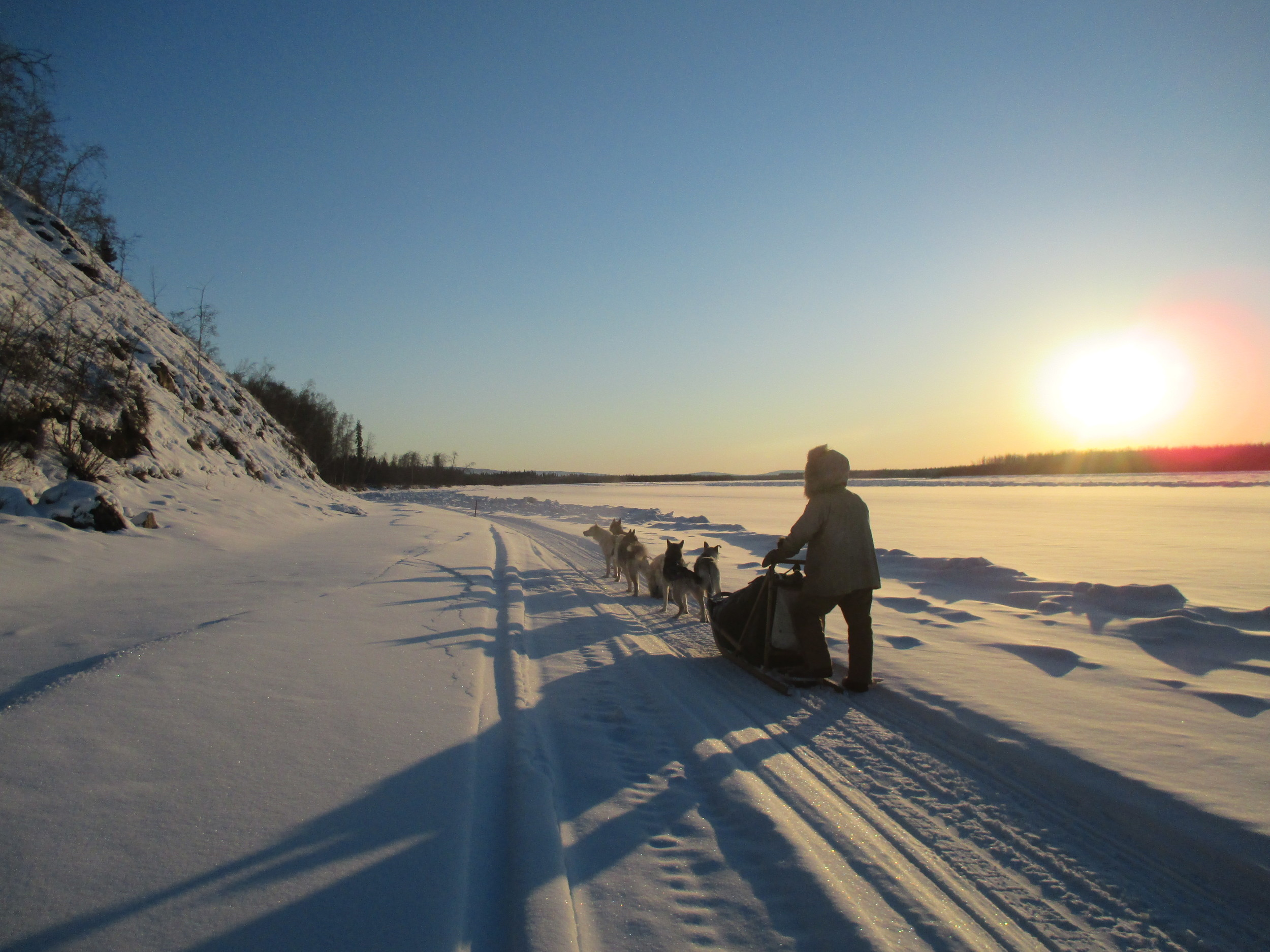 david mushes the dogs along the much cooler than everywhere else Tanana river near manley alaska