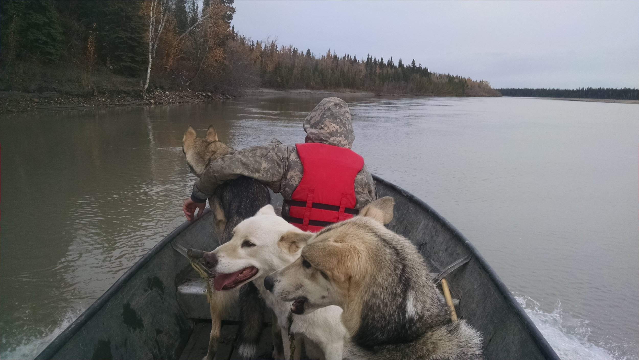 alex and dogs in boat