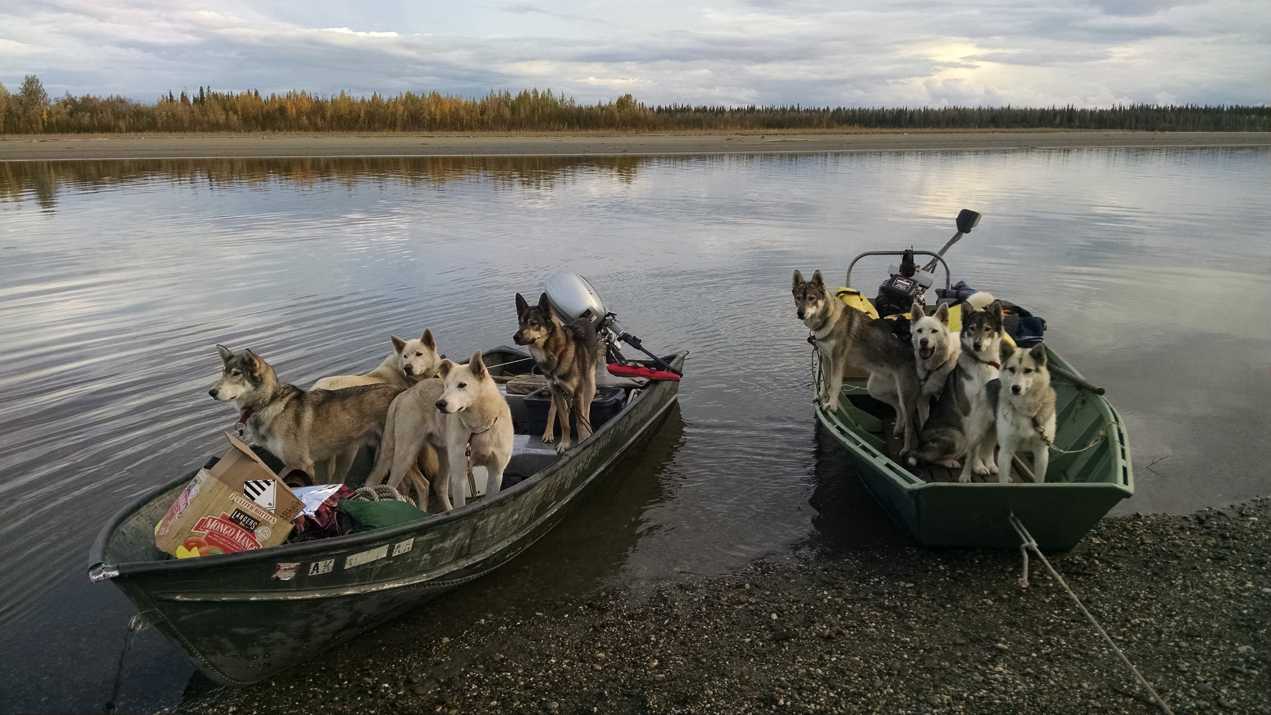 all dogs in 2 boats