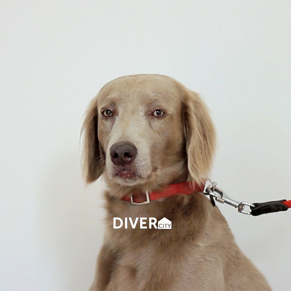 Diver-city-A.jpg