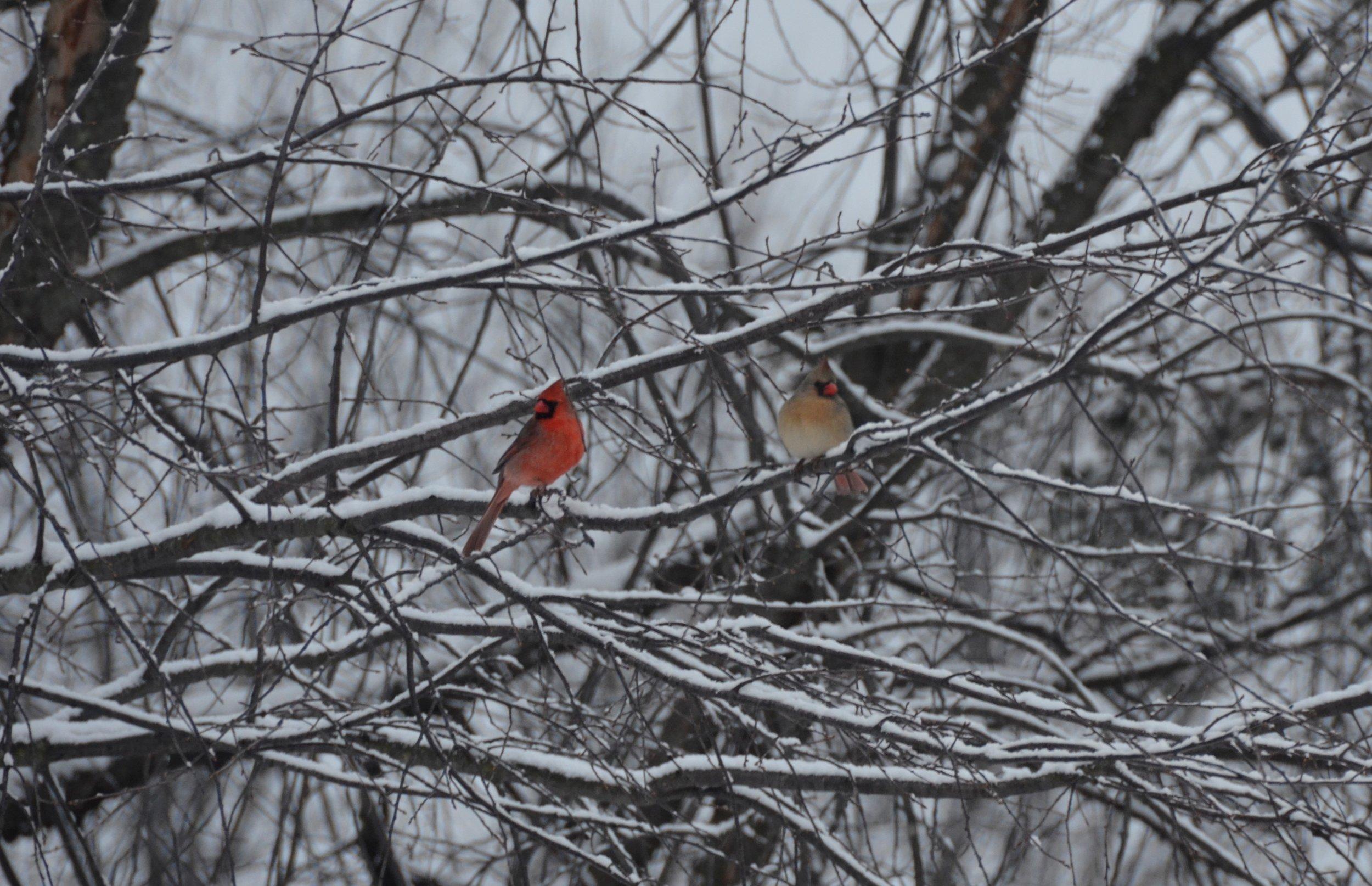 2017-03-17 19.19.29-2 cardinals.jpg