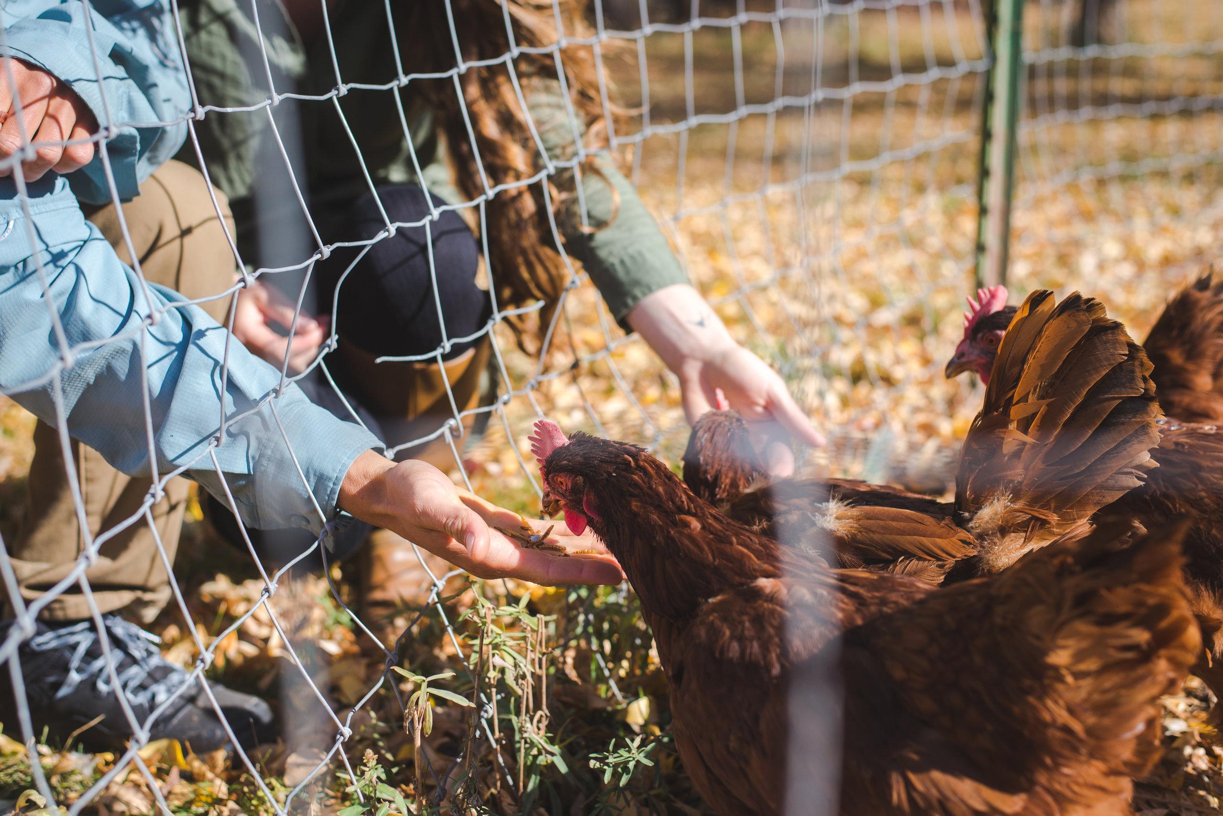 edwards colorado farm engagement session