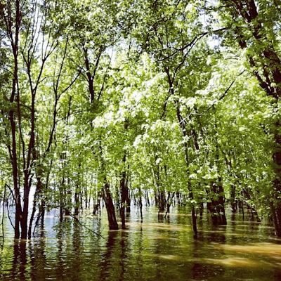 floodedforest.jpg