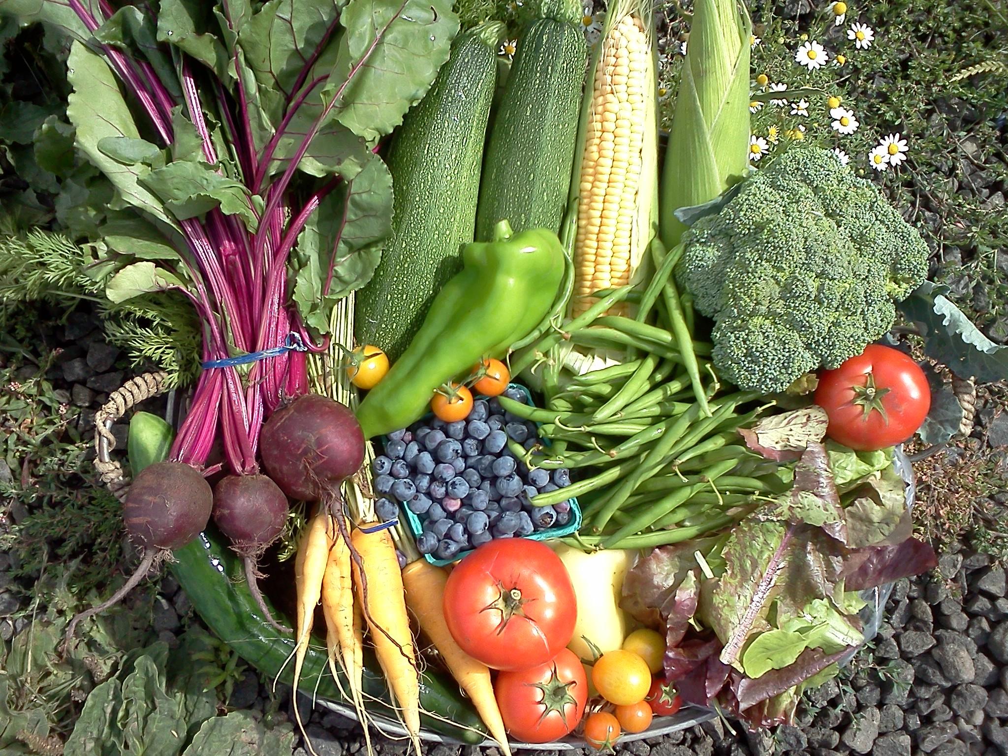 organic-CSA-farm-vegetables4 (1).jpg