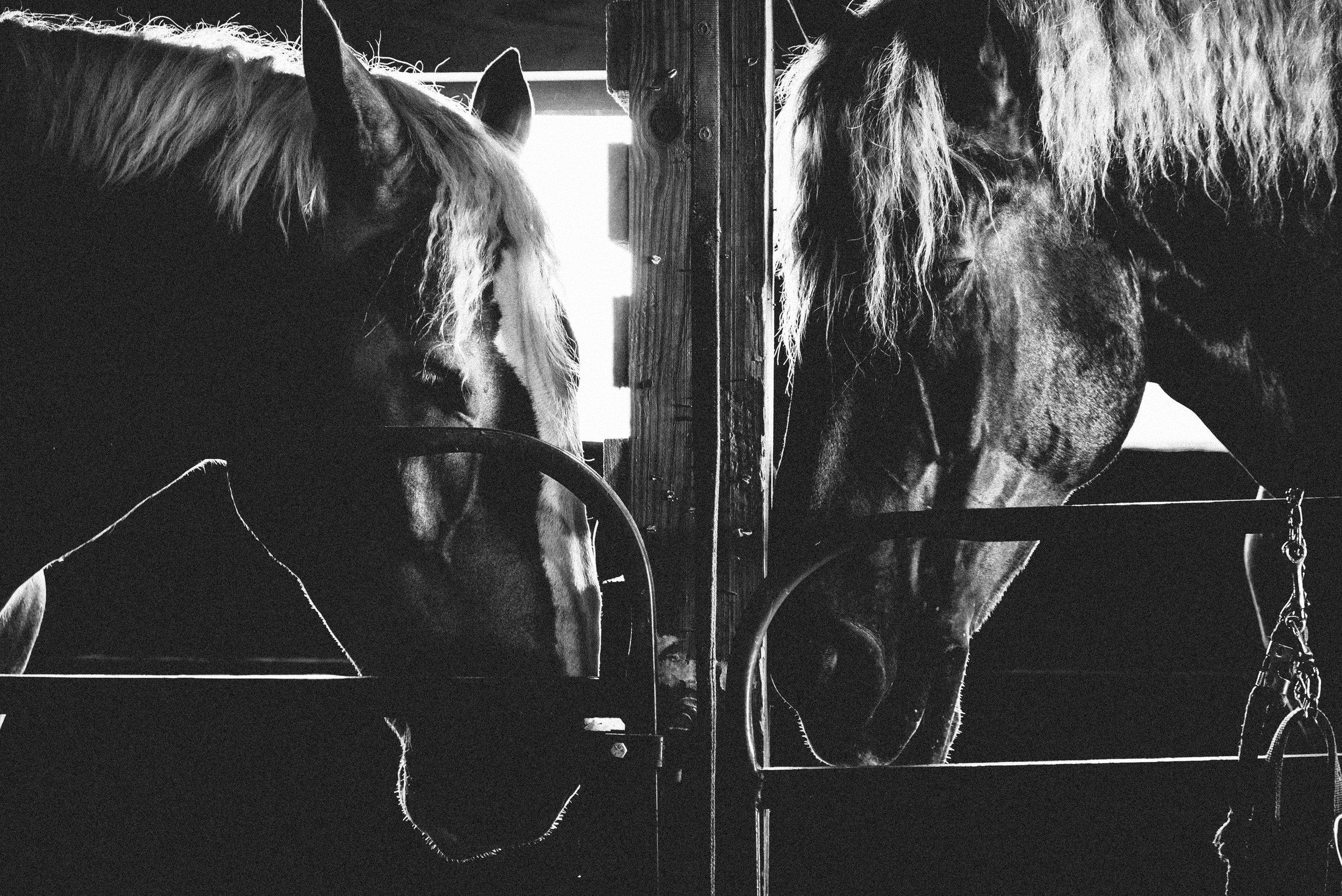 horse love-2.jpg