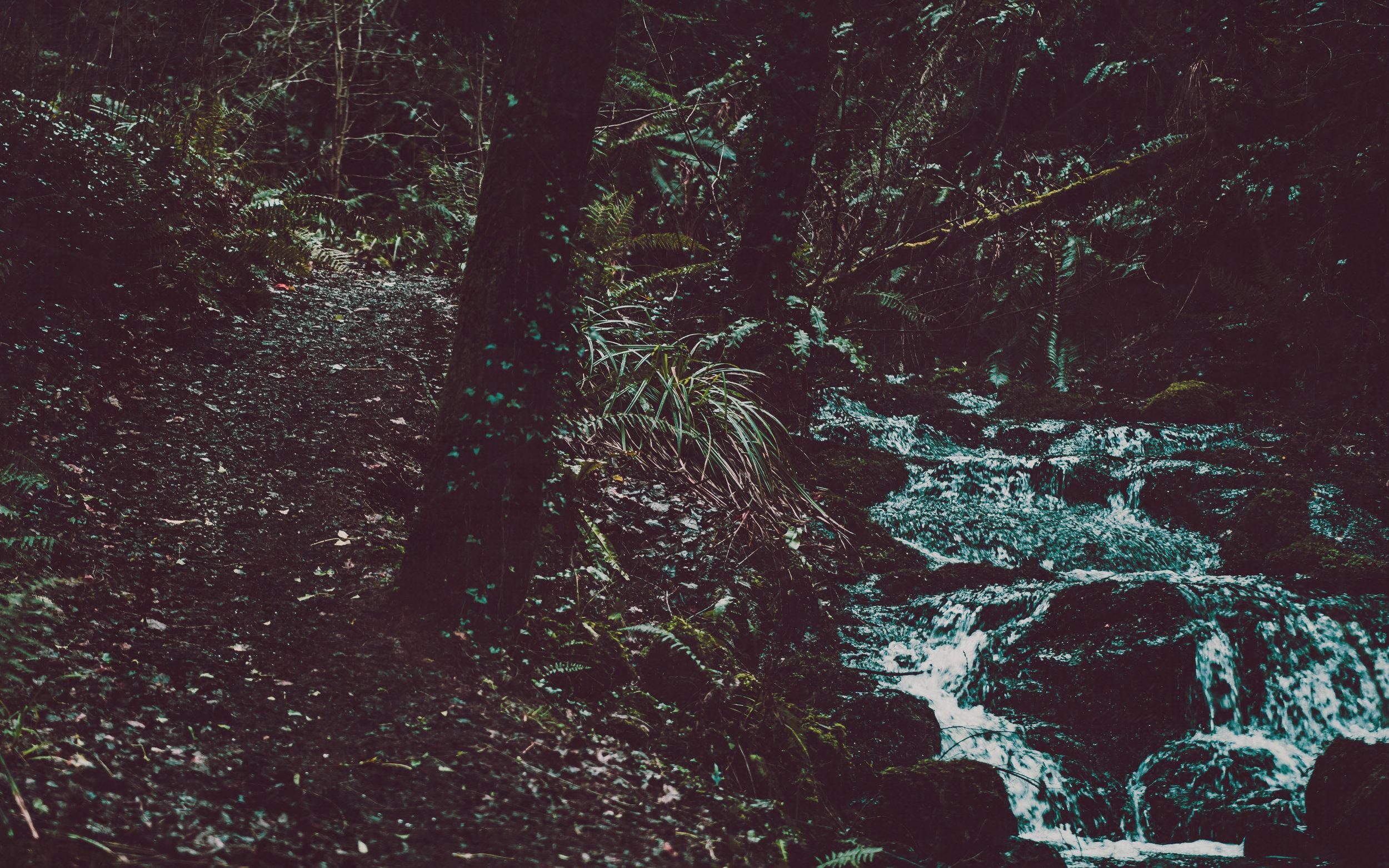 irish forest1.jpg