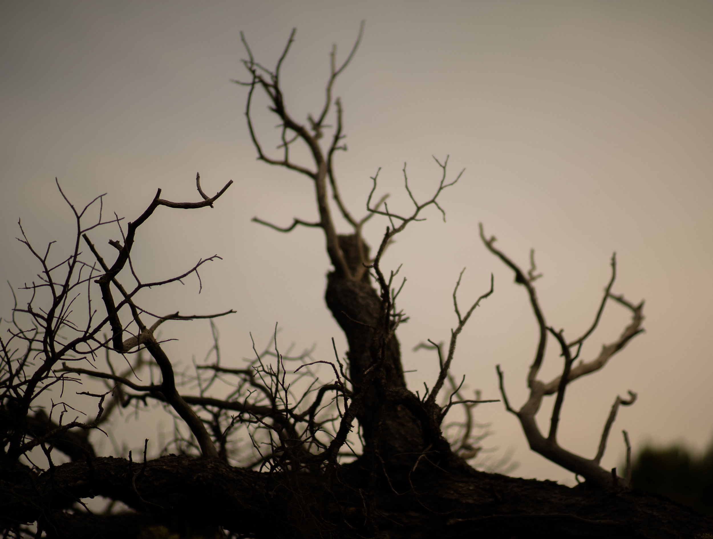 desert tree.jpg
