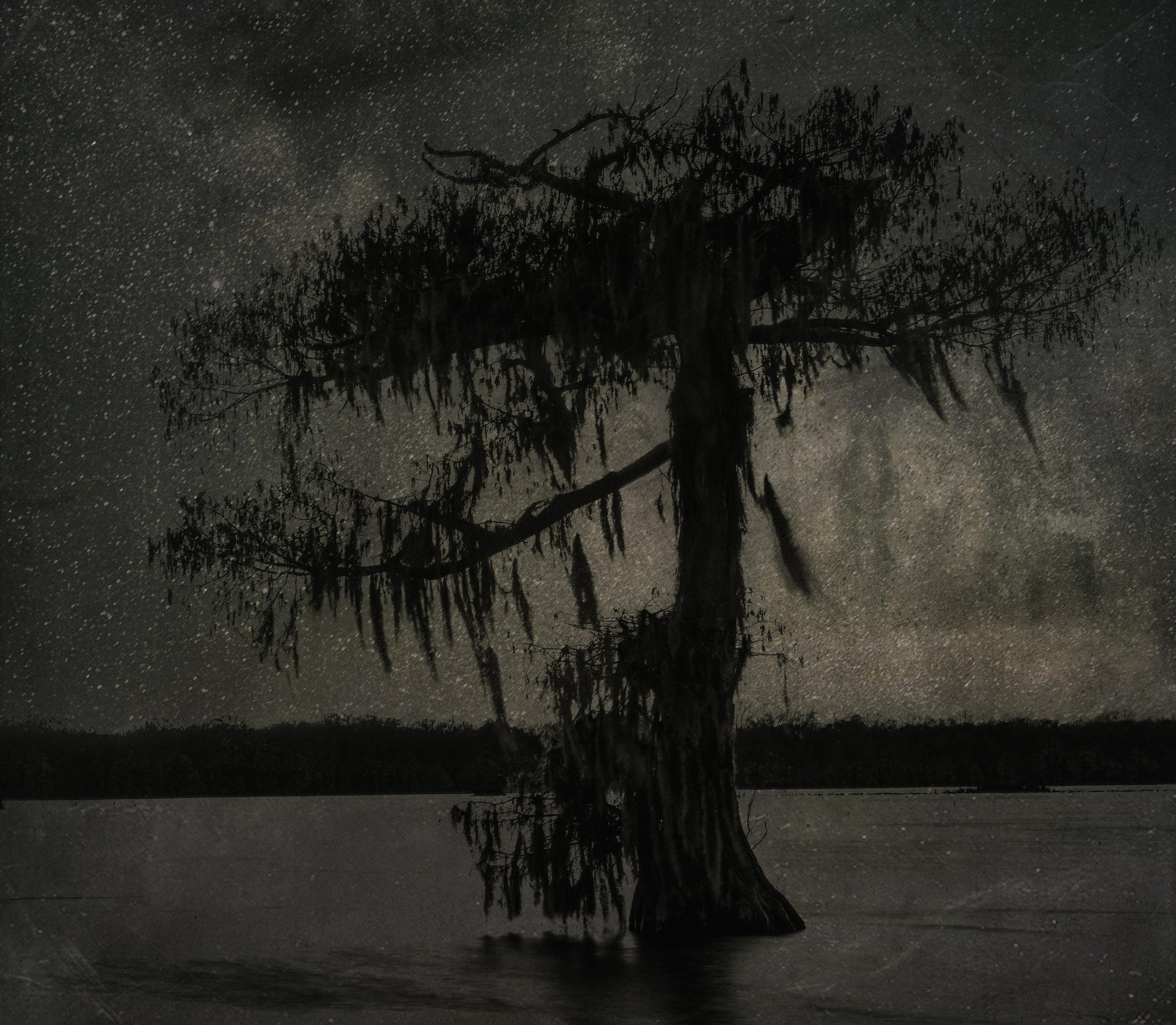 trees with stars.jpg