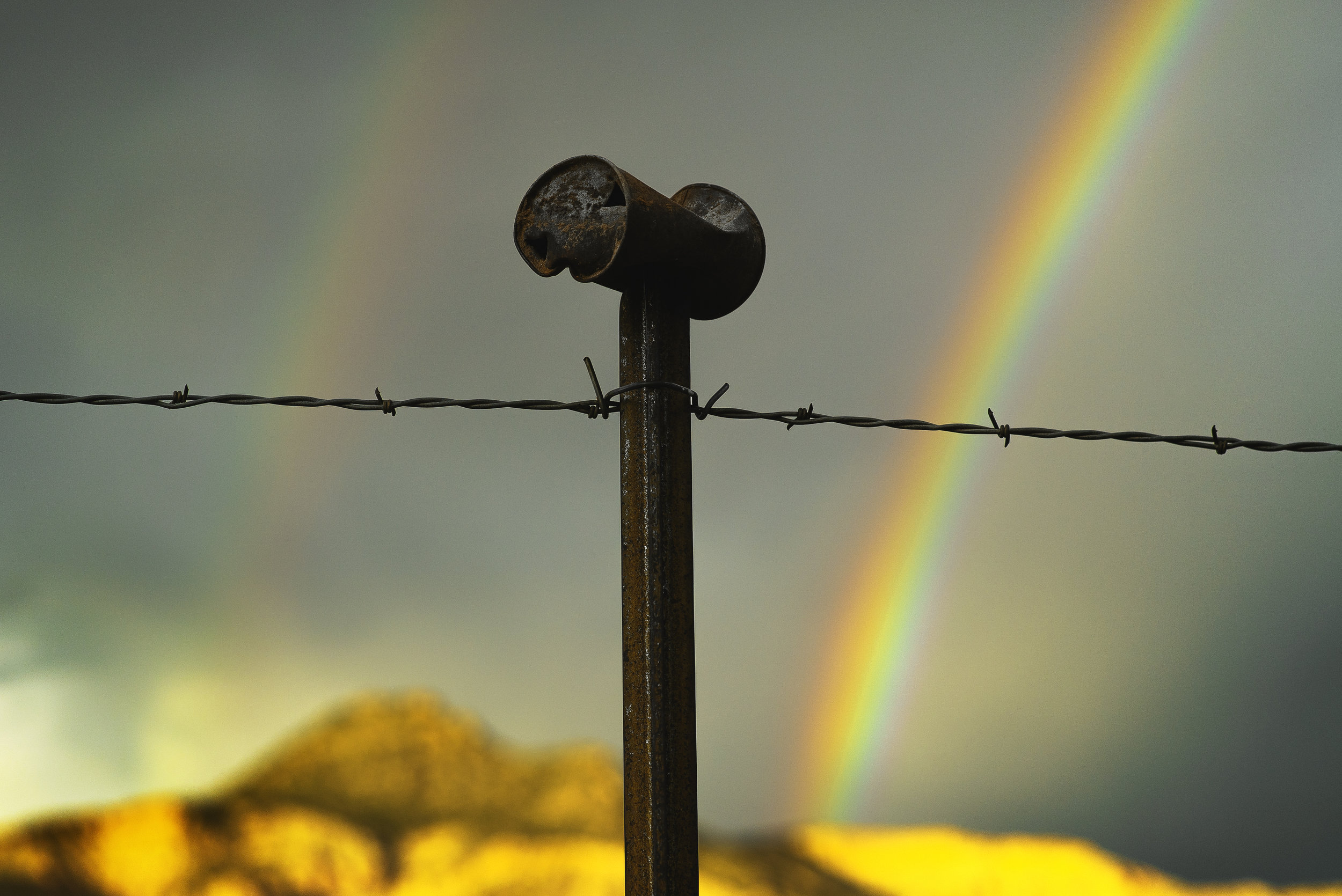 barb wire double rainbow can.jpg