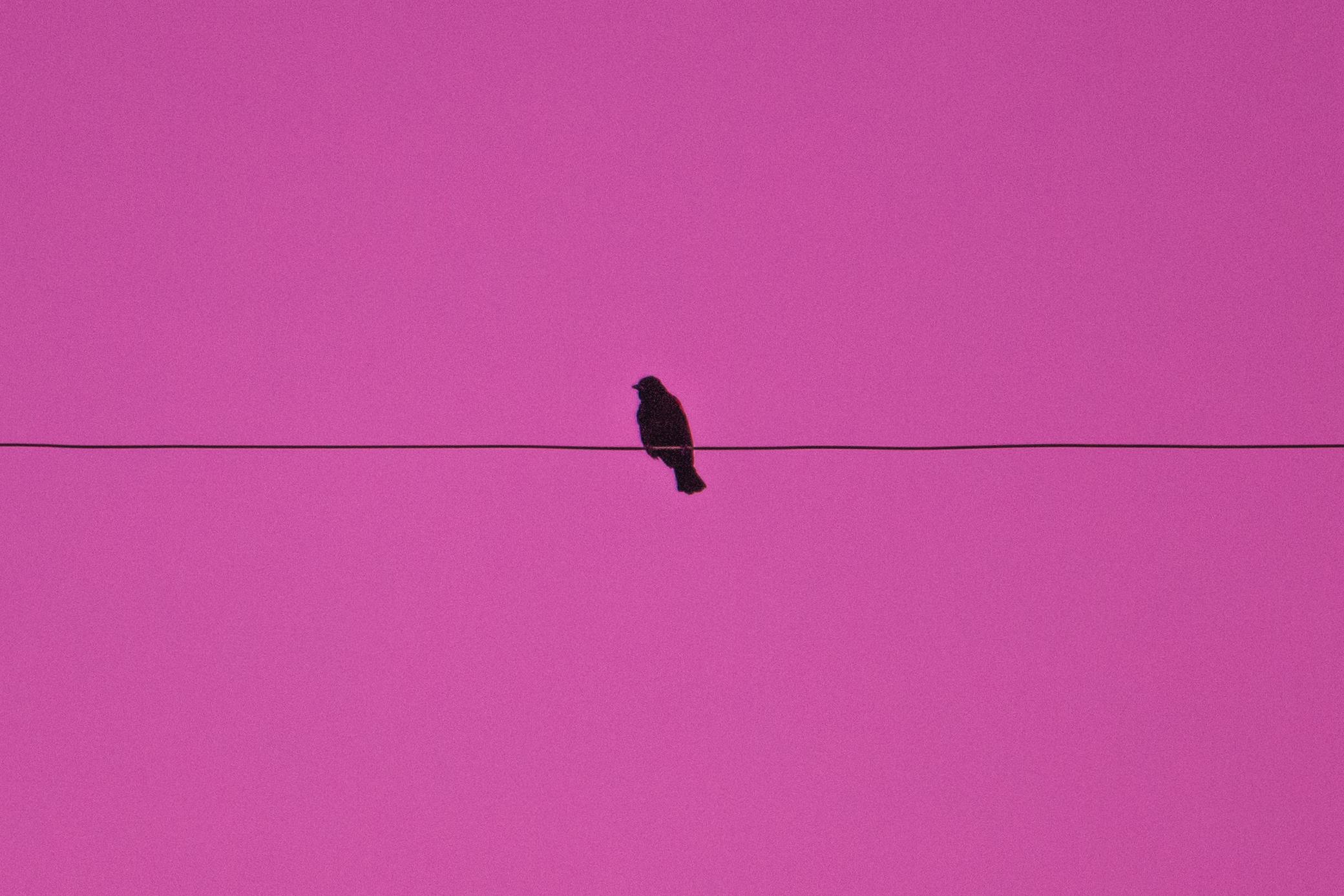 pinkskybird (1 of 1).jpg