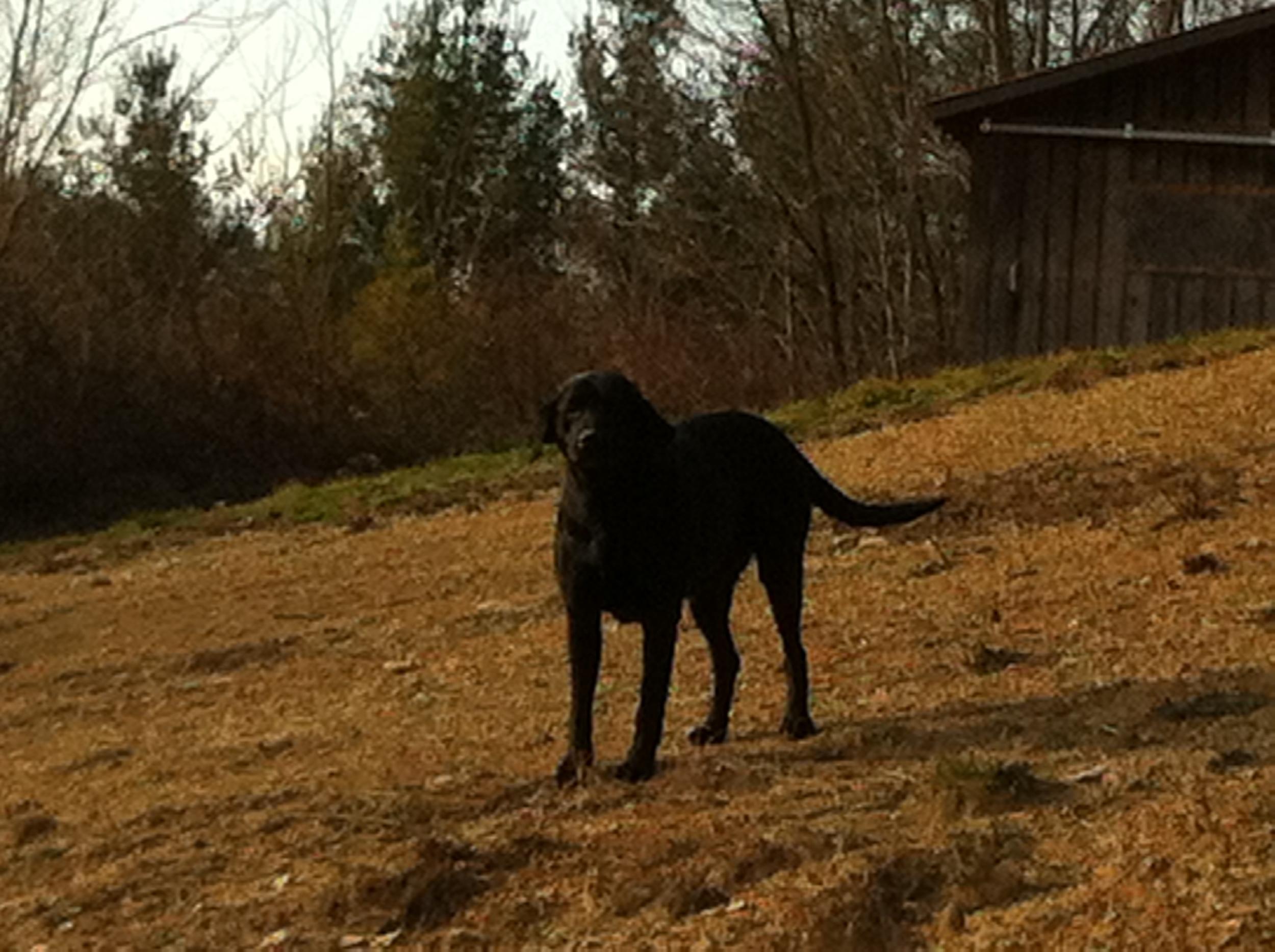 Daisy when I first met her in Kentucky.