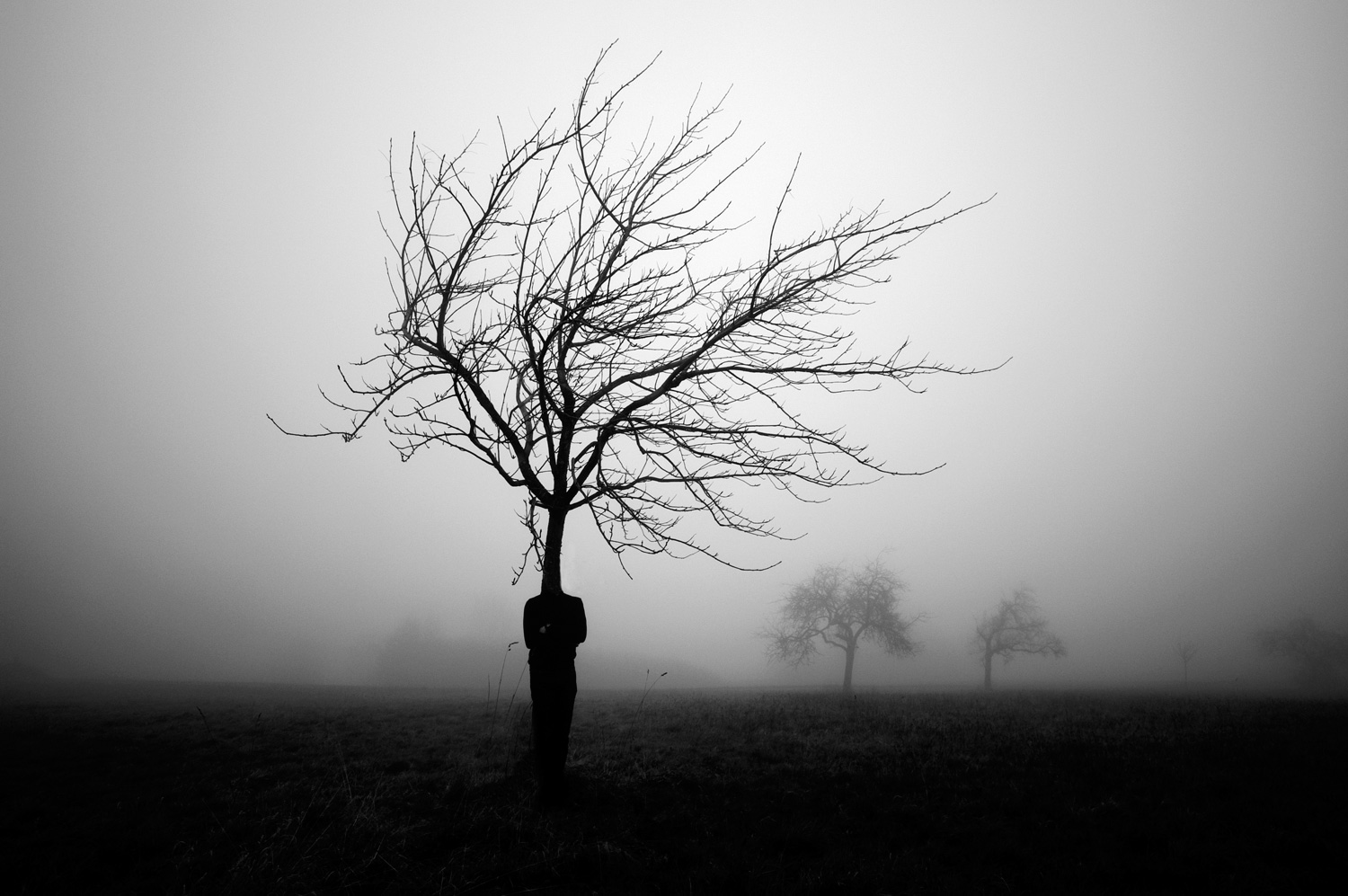 Three years later...  In the silence of the trees, I hear them singing And in the darkness one is dying And he is burning...       © www.kaveh-hosseini.com © https://www.facebook.com/KavehHosseiniPhotography