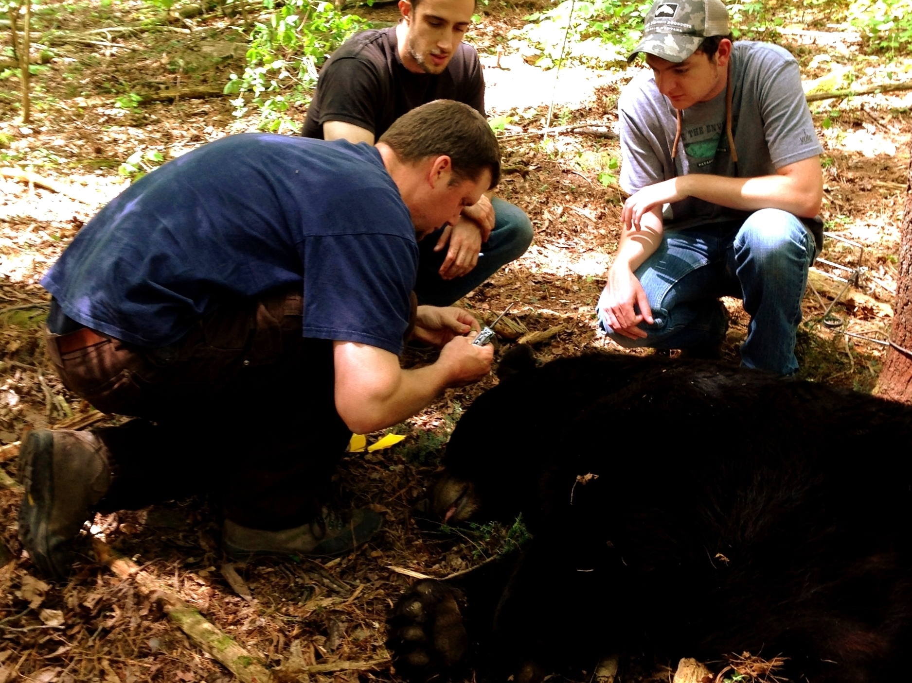 Bear trapping_14 - Copy.JPG