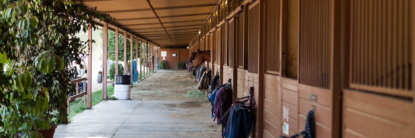 Full-Service Barn    Learn More