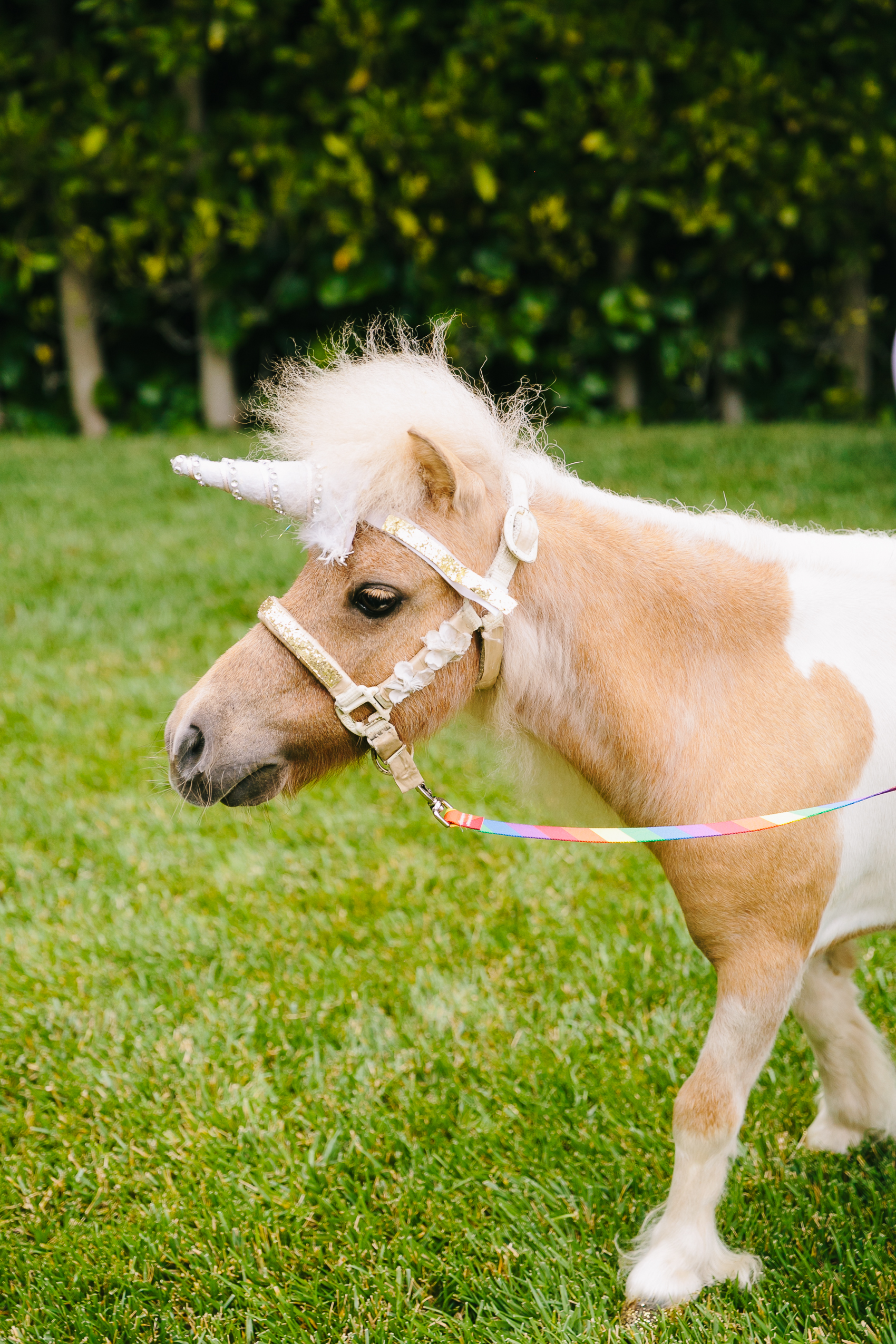 Los_Angeles_Family_Photographer_Luxury_Childrens_Party_Beverly_Hills_Unicorn_Birthday_Party-0230.jpg