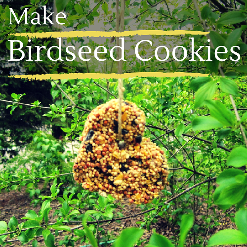 Make Birdseed Cookies