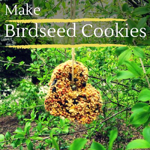 Make Birdseed Cookies