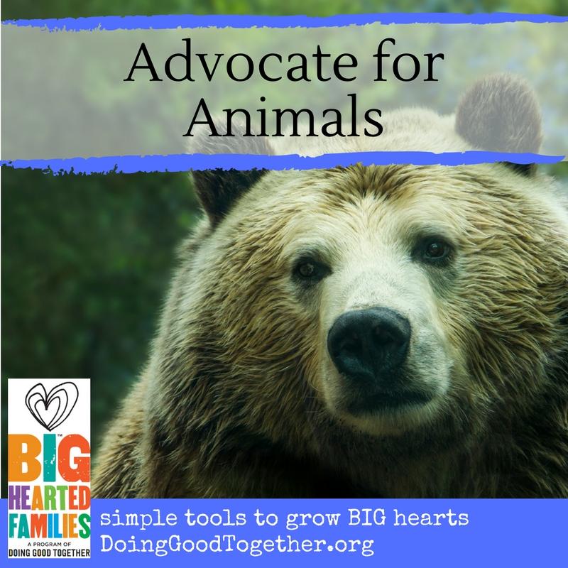 Advocate for Animals