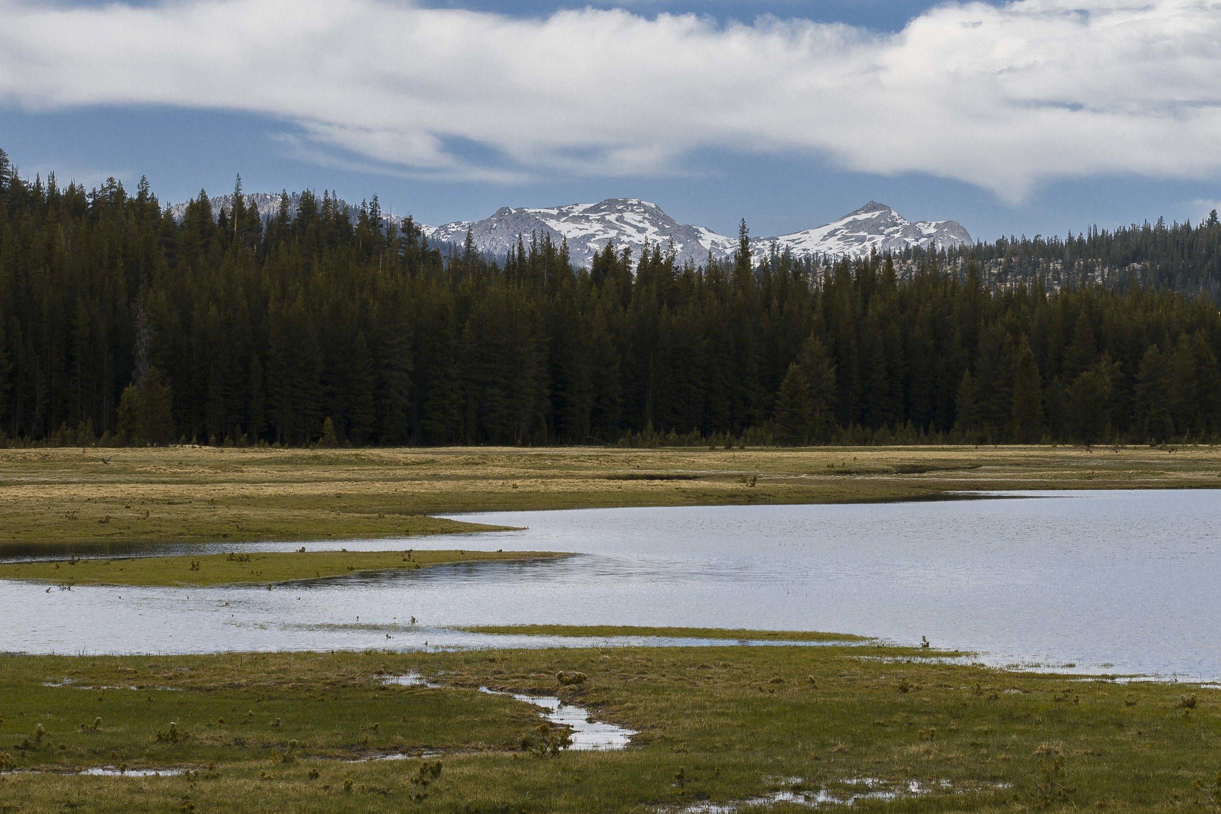 Glade, 2016  Yosemite National Park, California, United States  100mm f/20 1/100 sec ISO 200