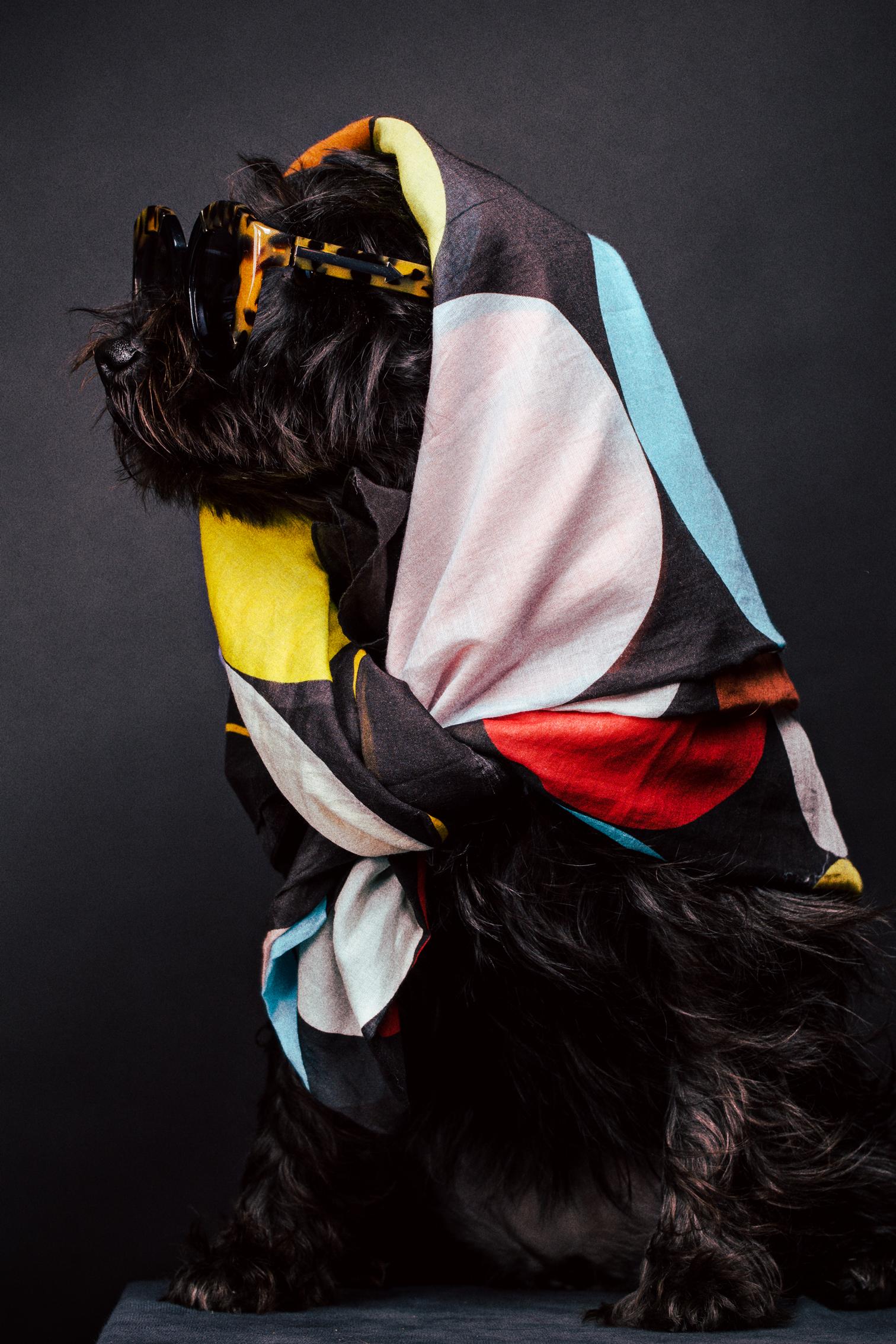 scarf - Paul Smith / sunglasses - Karen Walker
