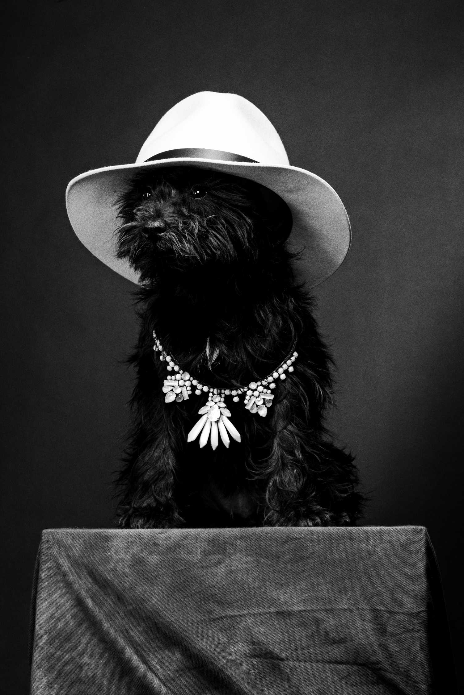 hat - Rag & Bone \ necklace - Rada
