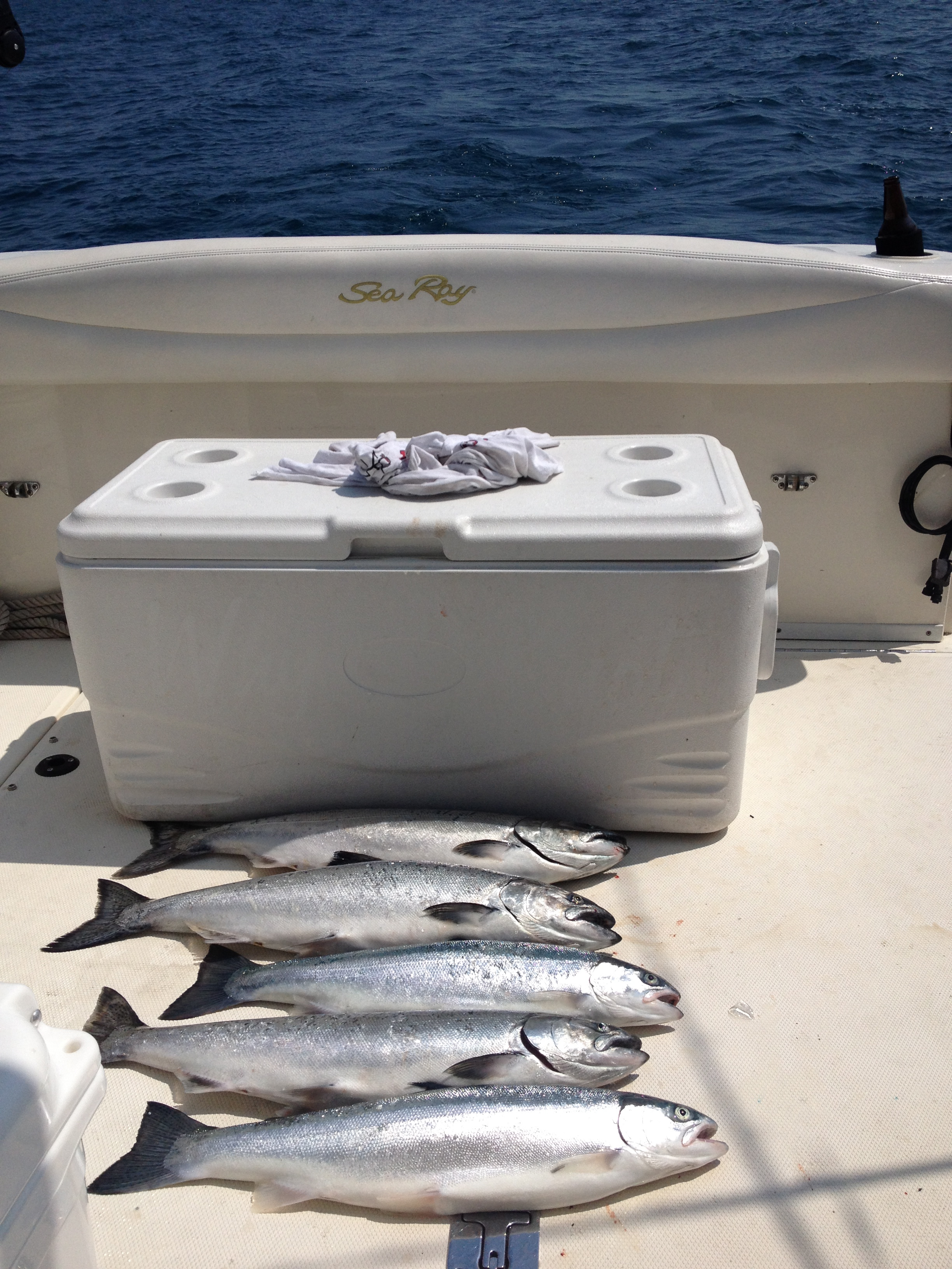 Salmon and Trout Fishing