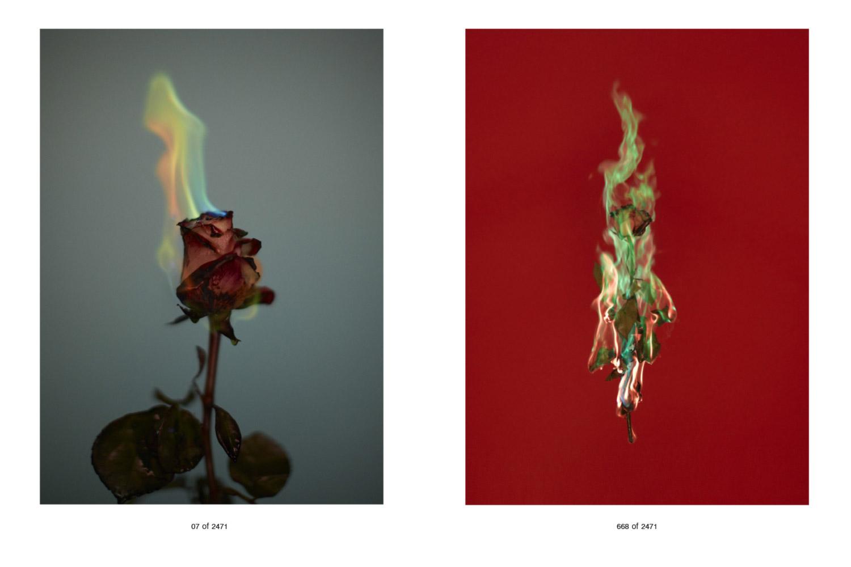 Flowers-for-Web-2.jpg