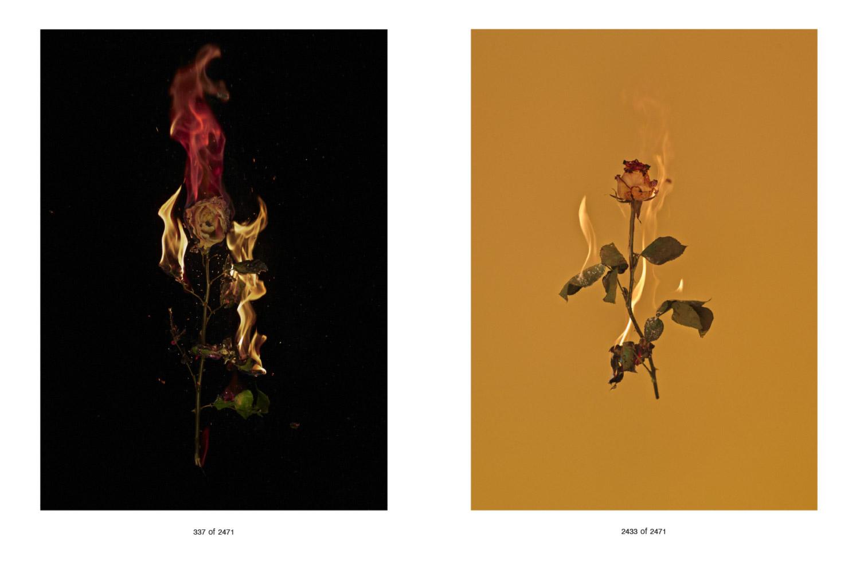 Flowers-for-Web-1.jpg