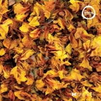 Fall (Beta)