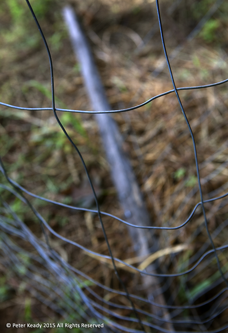 broken oak poles, wobbly wire and weeds gone wild are marks of a garden left to rest. This is an important part of gardening that few embrace. The same is true for our hearts.