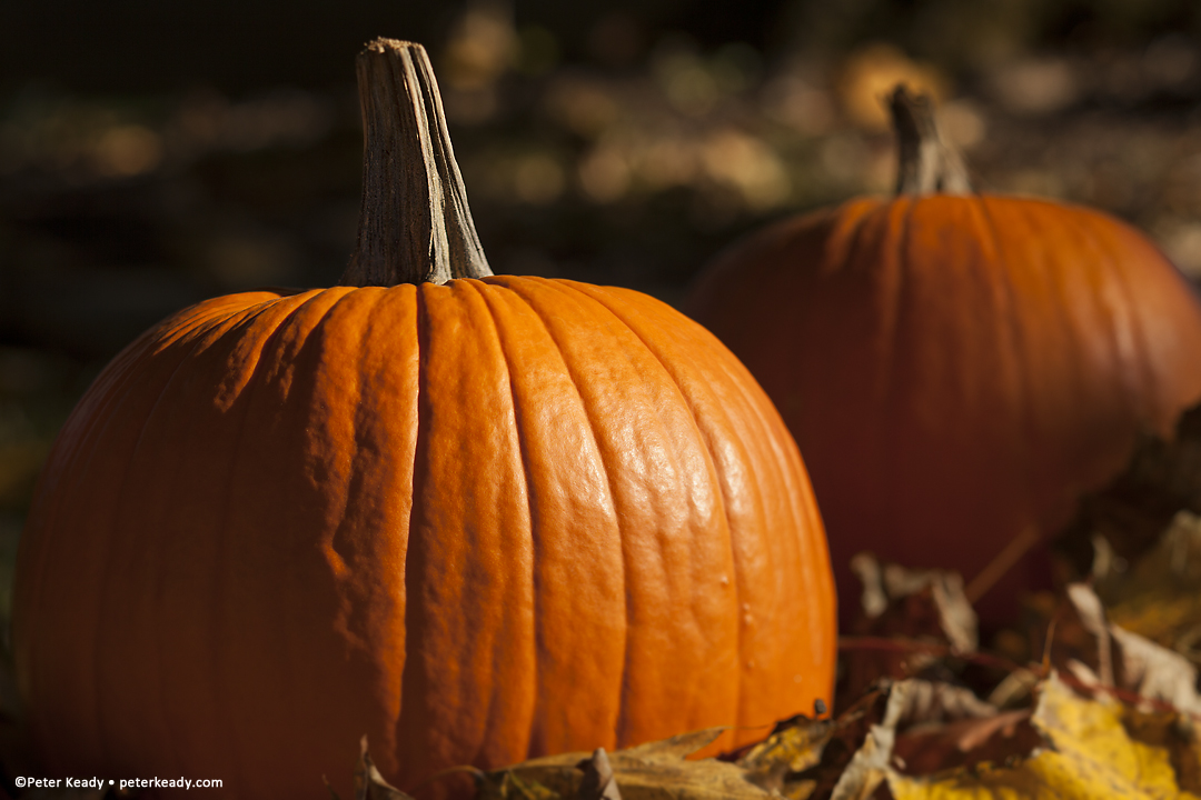 God is constantly speaking, trying to get our attention, but we're not paying attention. Sometimes we'll find him in the most unlikely of places and events. Draw near to Him! (Yeah, it's a cliche photo of pumpkins - but it's nice!)