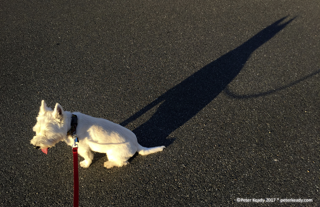 Taking a short break on a recent walk, our dog, Winston, casts a long shadow with the setting sun.