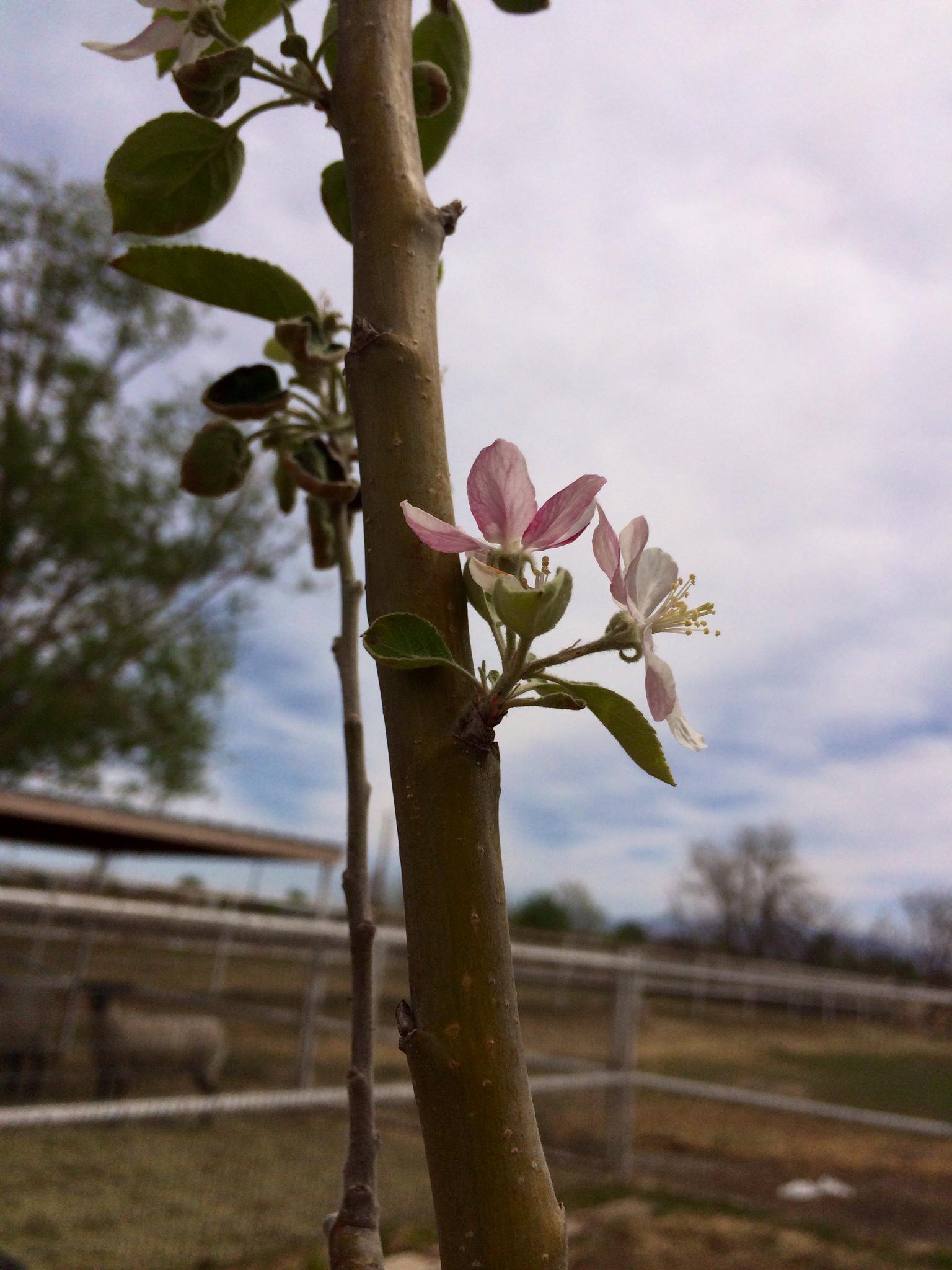 1st Bloom (Gen 46d) (2014)