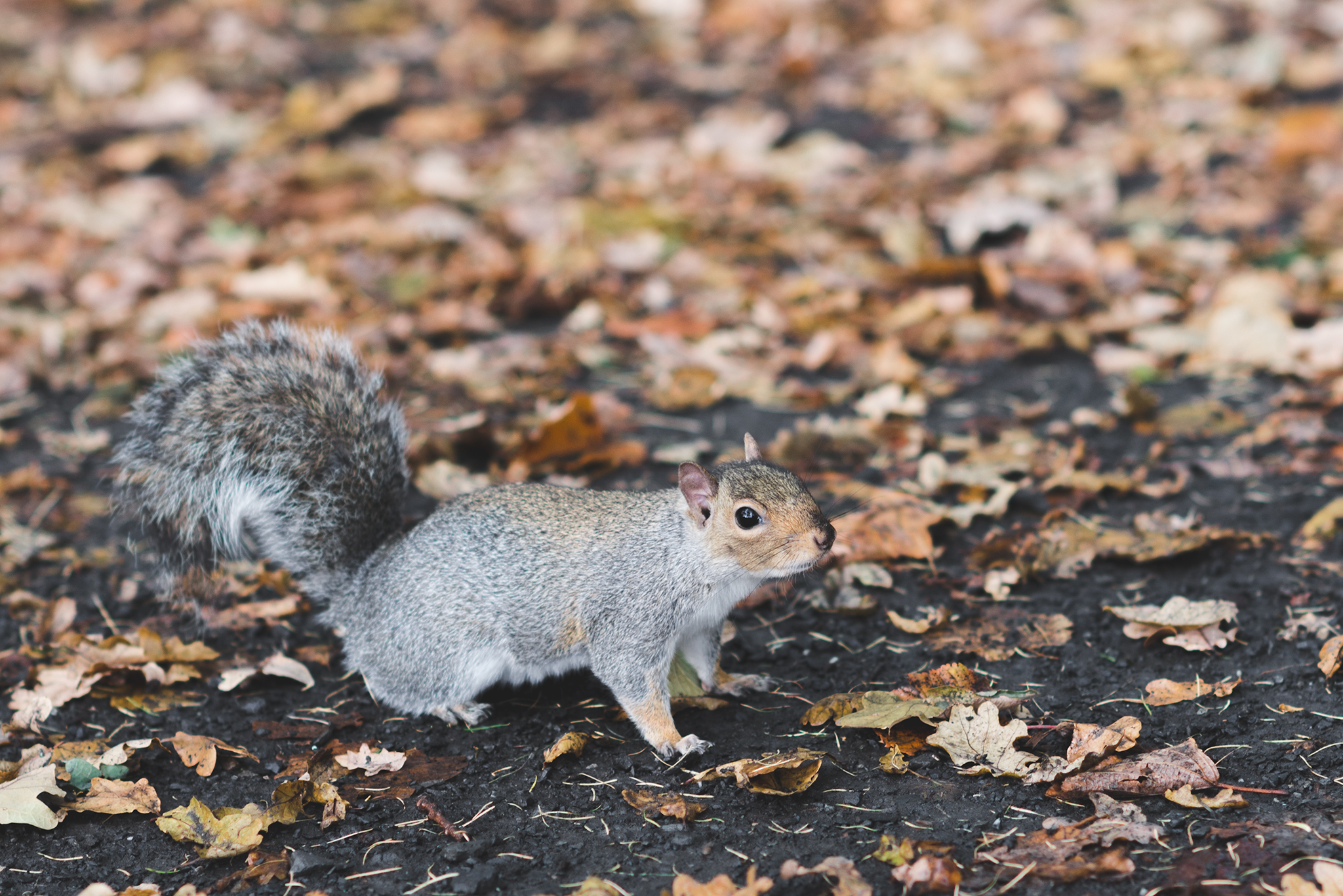 Northern_Ireland_Engagement_Photography_purephotoni_Lurgan_Park_Squirrel