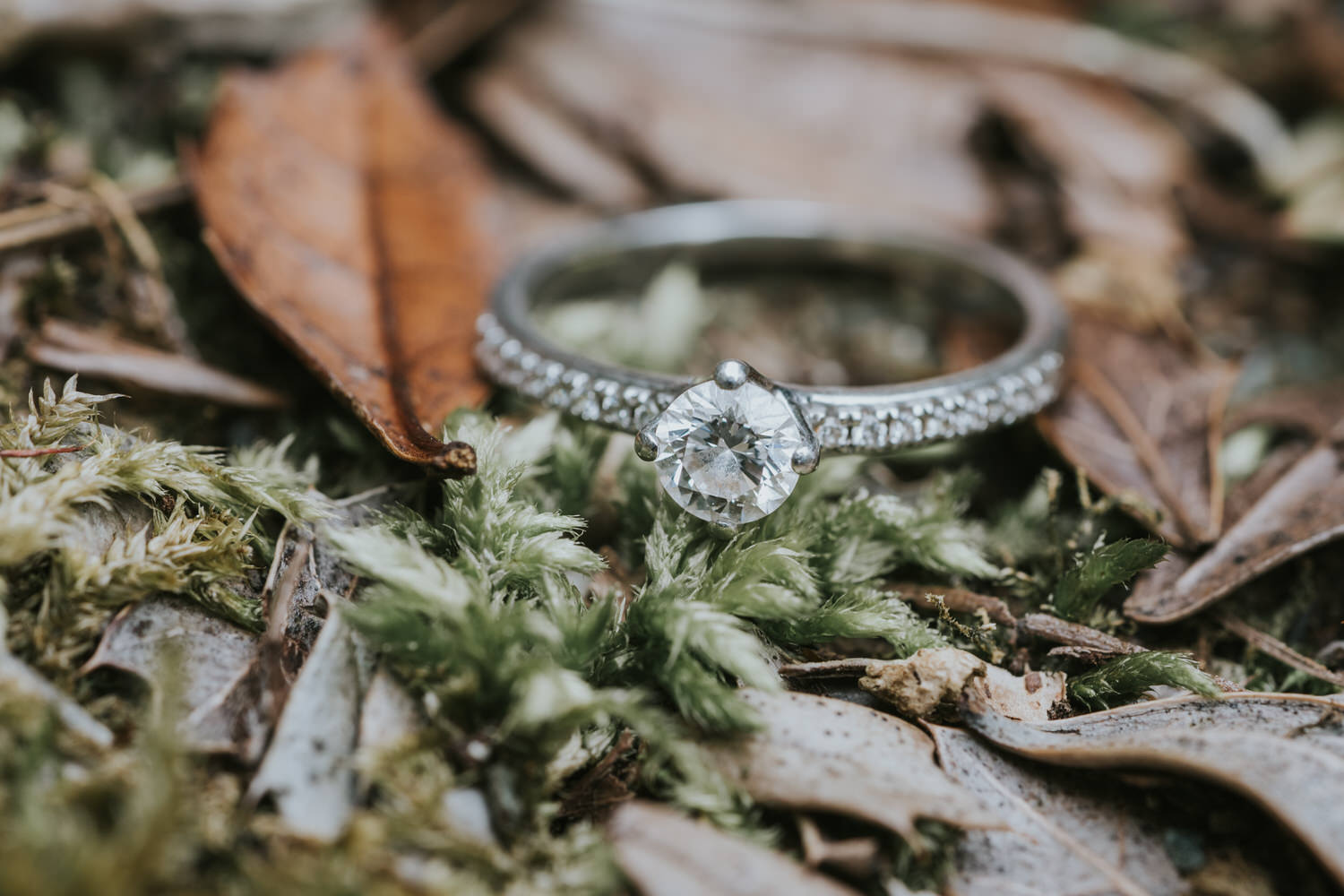 Tollymore Forest Park Engagement photos 36