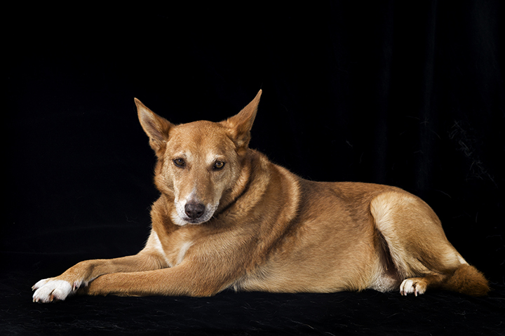 Dog Portrait, Melbourne, Tony Marin, Photography, Studio