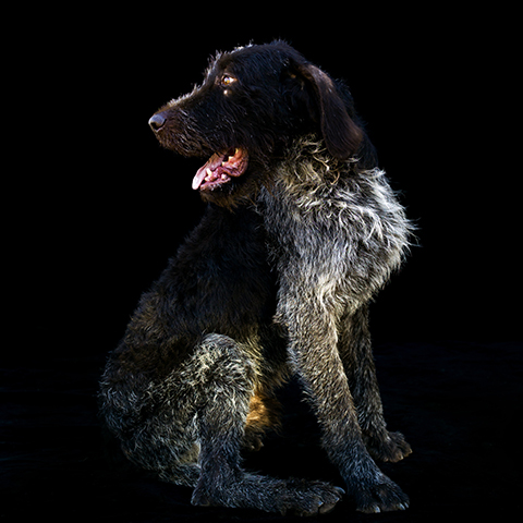 Dog Portrait, Melbourne, Photographer, Studio, Leica
