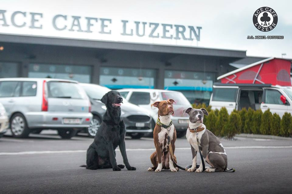DOG & CAR - TREFFEN @ ACE LUZERN