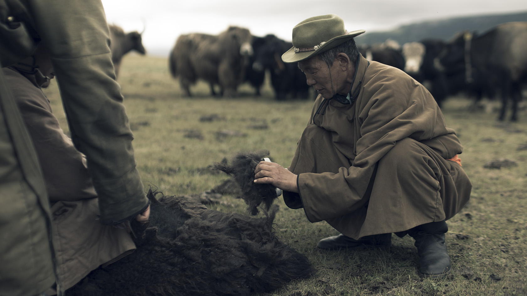 Hand-combing the yak individually, once a year, when the animals shed their winter coats.