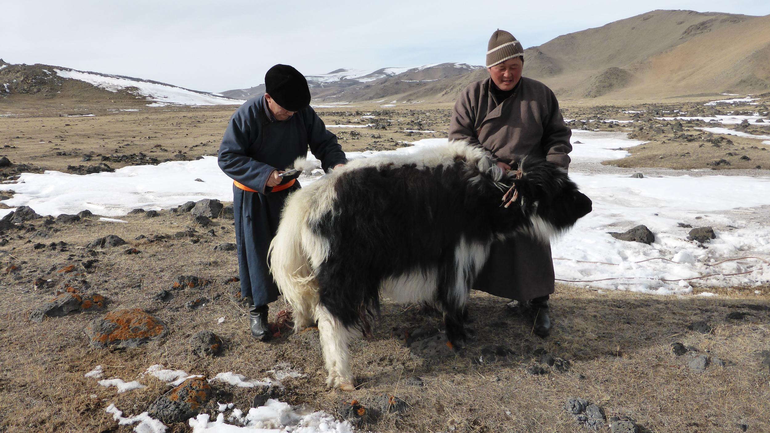 Tengri Yak Herders P1000591.jpg