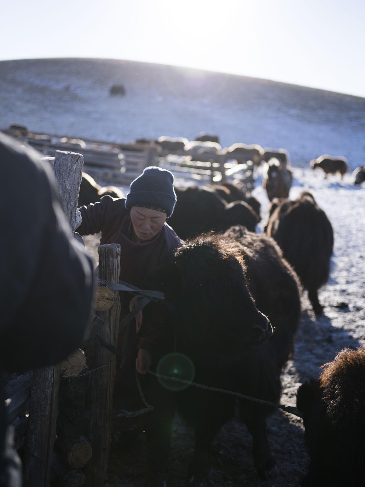 Tengri_supporting_nomadic_herders.jpg