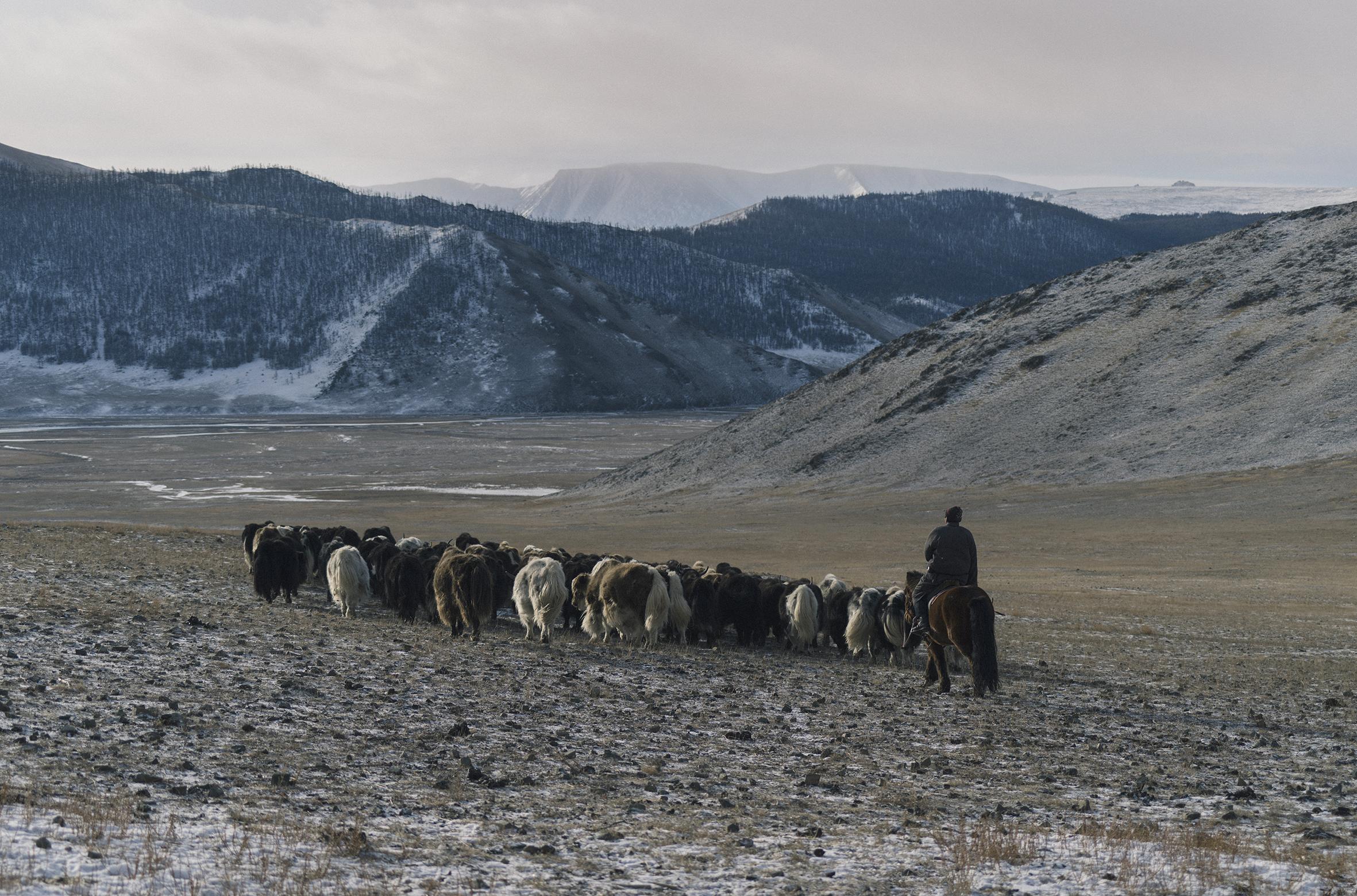 Khangai Mountains of Mongolia.