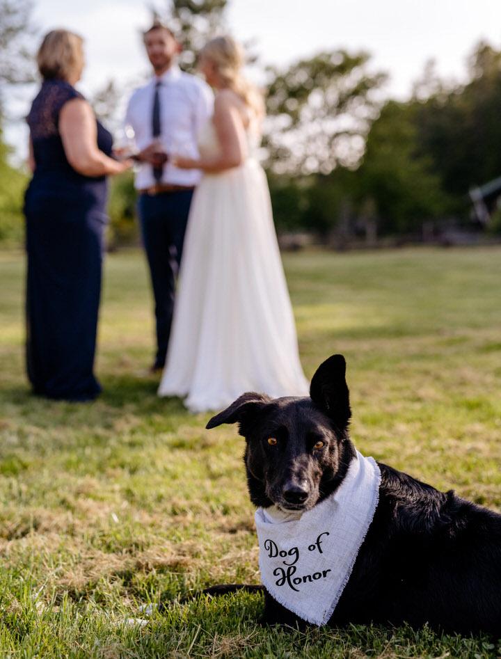 westscott-bay-wedding-3644.jpg